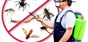 Pest-Control-1000x480
